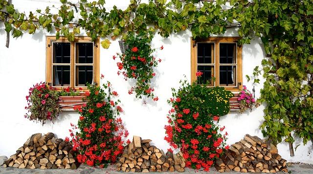 květiny u domu.jpg