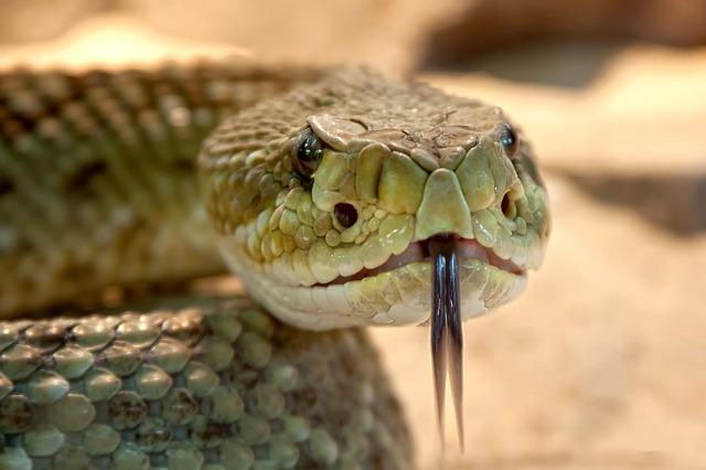 hlava hada.jpg