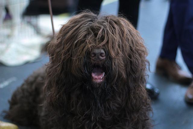 zarostlý pes